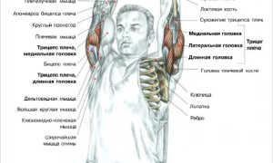 Разгибание рук с изогнутым грифом штанги из-за головы