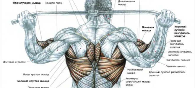Тяги верхнего блока за шею