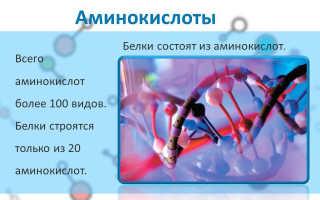 Белки и аминокислоты. Тонкости приема добавок