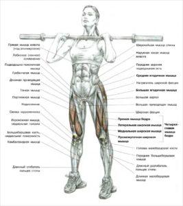 Фронтальный присед: какие мышцы работают